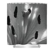 Lily - American Cheerleader 28 - Bw - Water Paper Shower Curtain