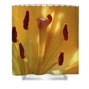 Lily - American Cheerleader 36 Shower Curtain