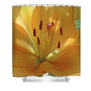 Lily - American Cheerleader 38 Shower Curtain