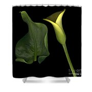 Lily And Leaf Number Two Shower Curtain