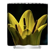 Lily And Sunshine Shower Curtain