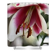 Lily Beauty Shower Curtain