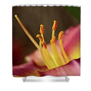 Lily Bloom Shower Curtain