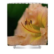 Lily Bloom Profile Shower Curtain