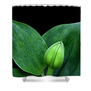 Lily Bud Shower Curtain