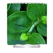 Lily Buds Shower Curtain