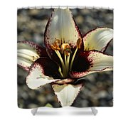 Lily Burn II  Shower Curtain