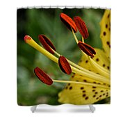 Lily Center Shower Curtain by William Selander