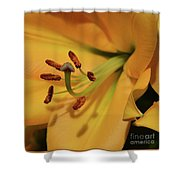 Lily Close Up Shower Curtain