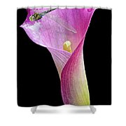 Lily Dragon 3 Shower Curtain