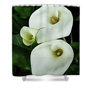Lily Family Shower Curtain