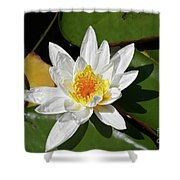 Lily Floating On Pond IIi Shower Curtain