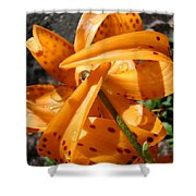 Lily Flower Art Prints Tiger Lilies Giclee Baslee Troutman Shower Curtain