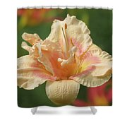 Lily Flower - Daylily Shower Curtain