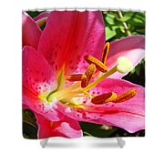 Lily Flower Pink Lilies Giclee Art Prints Baslee Troutman Shower Curtain