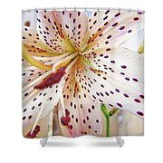 Lily Flower White Lilies Art Prints Baslee Troutman Shower Curtain