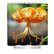 Lily Flowers Art Orange Tiger Lilies Giclee Baslee Troutman Shower Curtain