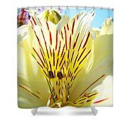 Lily Flowers Art Prints Yellow Lillies 2 Giclee Prints Baslee Troutman Shower Curtain