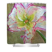Lily From Paradise Shower Curtain