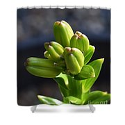 Lily Growth  Shower Curtain