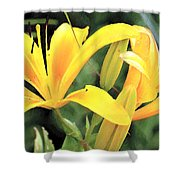 Lily - Id 16217-152018-5631 Shower Curtain