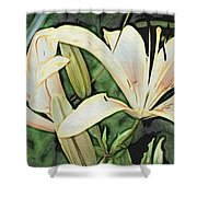 Lily - Id 16217-152054-3169 Shower Curtain