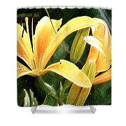 Lily - Id 16217-152100-9584 Shower Curtain