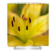 Lily In Close-up Shower Curtain