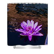 Lily In Pond Shower Curtain