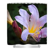 Lily In The Rain By Flower Photographer David Perry Lawrence Shower Curtain
