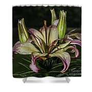 Lily In The Rain Shower Curtain