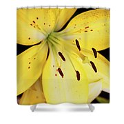Lily Macro Shower Curtain