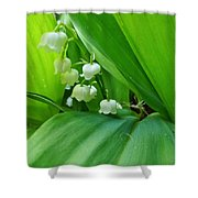 Lily Of The Valley Shower Curtain by Jeremy Hayden