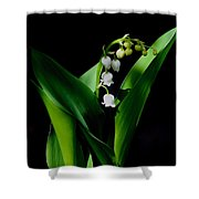 Lily Of The Valley Shower Curtain