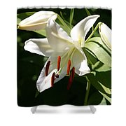 Lily Of White Shower Curtain