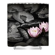 Lily Pad Blossoms Shower Curtain