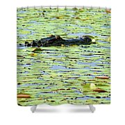 Lily Pad Gator Shower Curtain