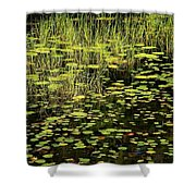 Lily Pad Place Shower Curtain