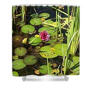 Lily Pad Pond In High Noon Sun Shower Curtain
