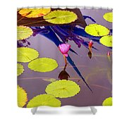 Lily Pads 2 Shower Curtain