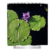 Lily Pads From Above Shower Curtain