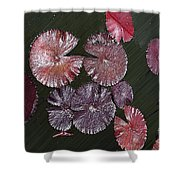 Lily Pads In The Pond Shower Curtain