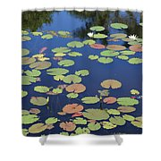 Lily Pads On Blue Pond Shower Curtain