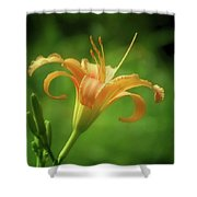 Lily Picture - Daylily Shower Curtain