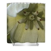 Lily Poster Shower Curtain