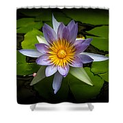 Lily Queen Of The Pond  Shower Curtain