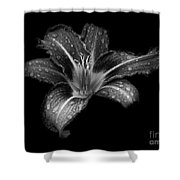 Lily Raindrops In Giverny, France, Black And White Shower Curtain