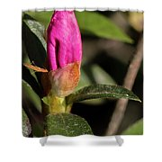 Lily Ready To Bloom Shower Curtain