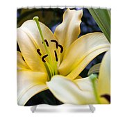 Lily Splendor Shower Curtain