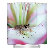 Lily Toad Shower Curtain